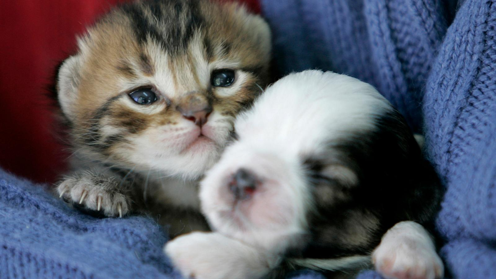 Thanks To Lucys Law England Will Ban Puppy And Kitten Sales In Pet