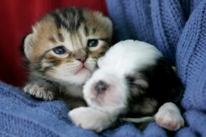 puppy versus kitten