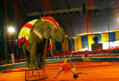 A circus artist performs with an elephant at the Rambo Circus on the outskirts of Mumbai, in April 2013.