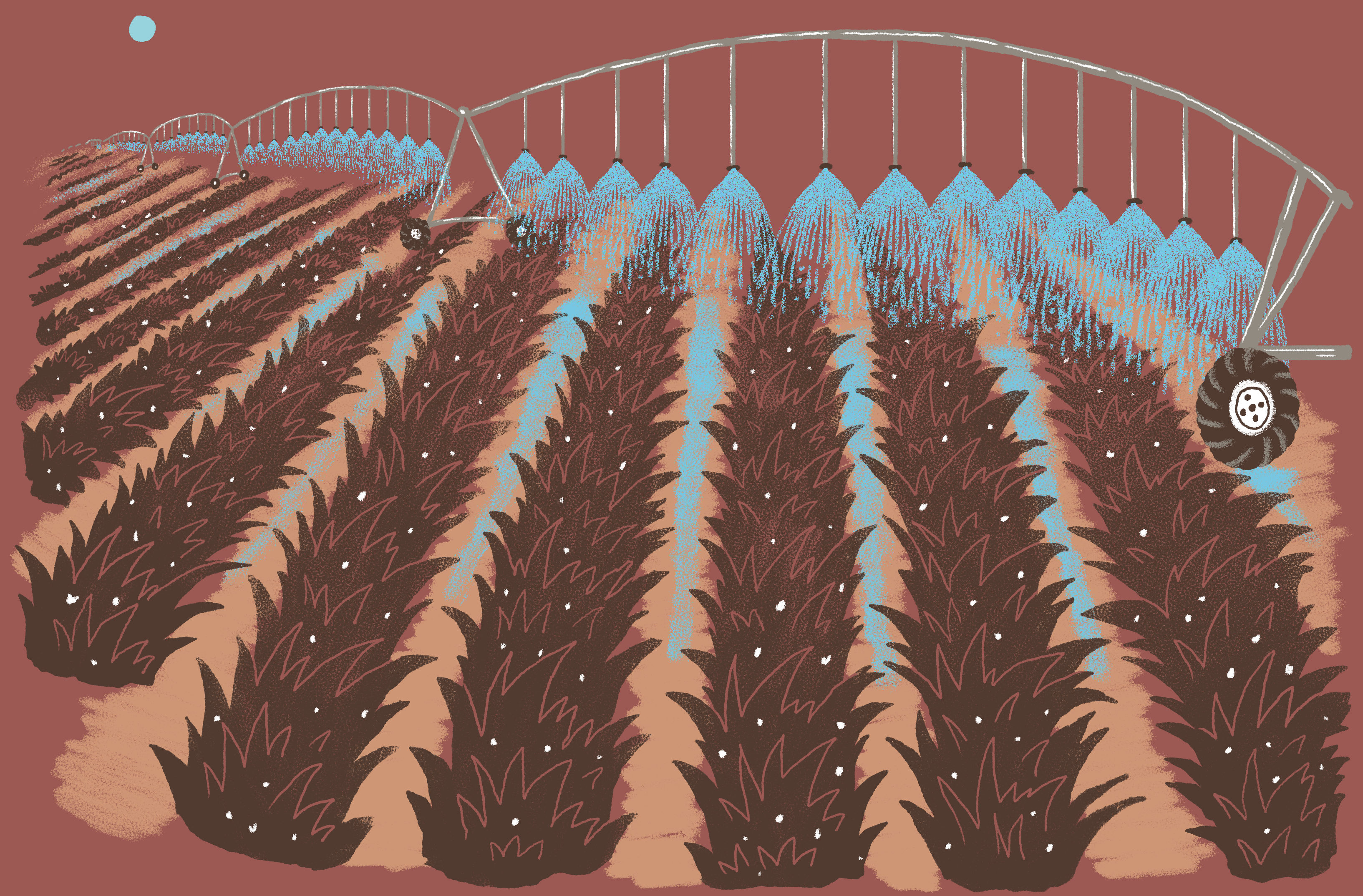 Illustration of irrigated fields in South Texas.