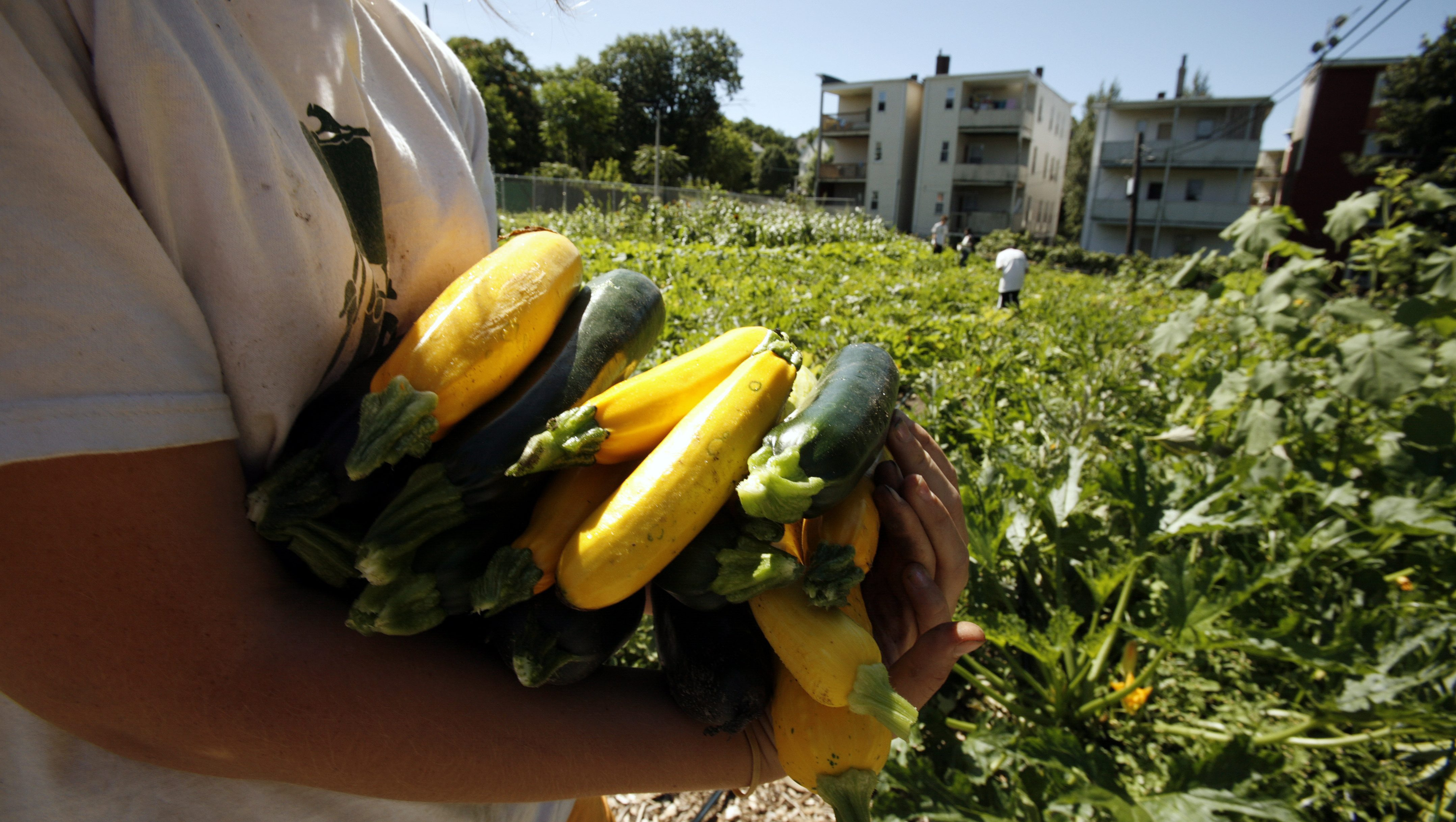 What to do with all that late summer zucchini: three super-simple ideas