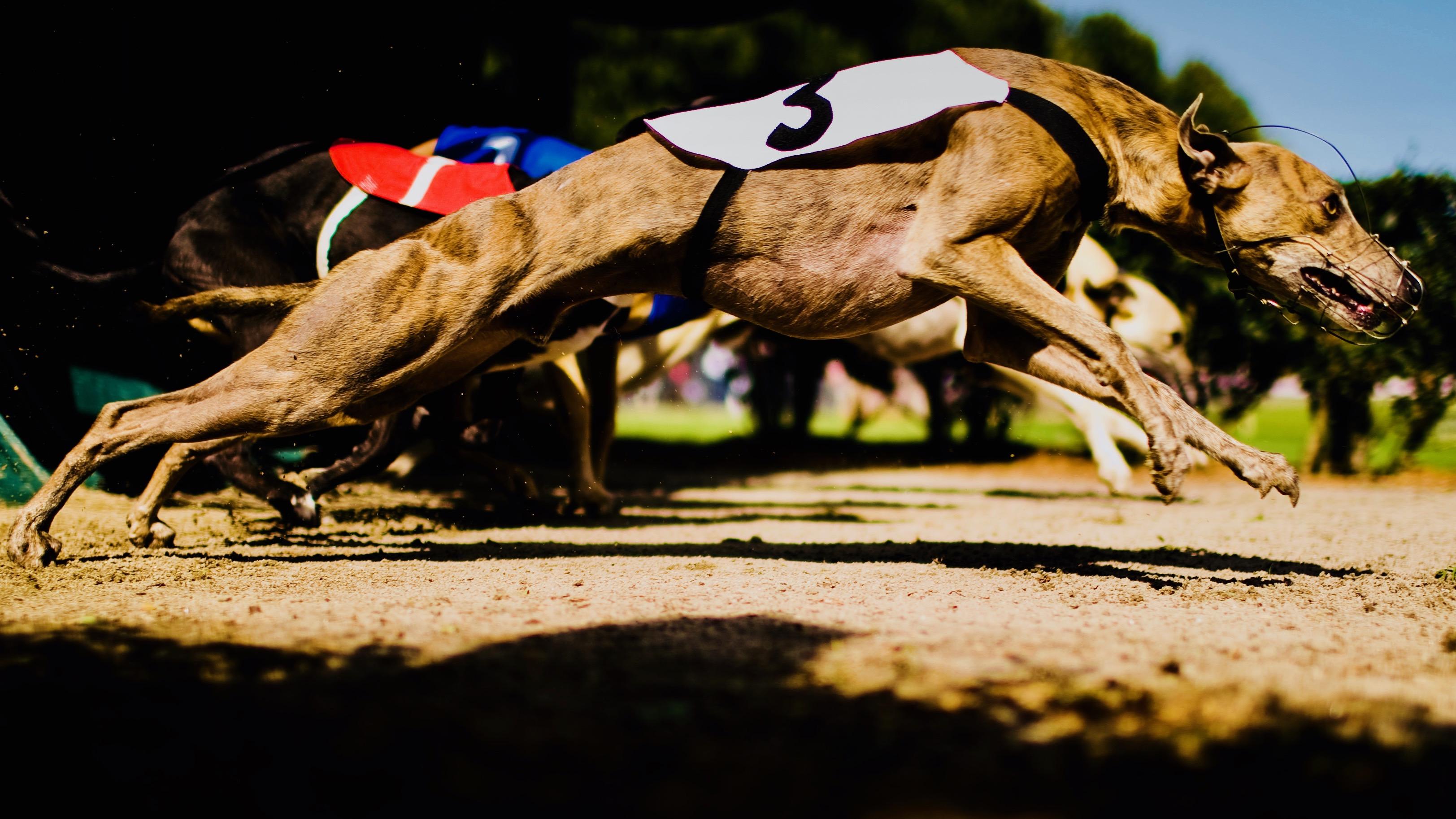 e4bf2177fd0ca Florida may ban dog racing