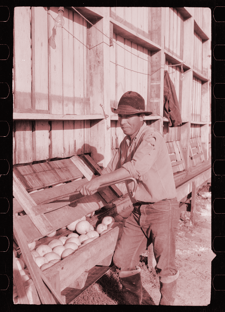 A 1942 photograph of a man sorting washed grapefruit at a juice plant in Weslaco, Texas, a town in the Rio Grande Valley