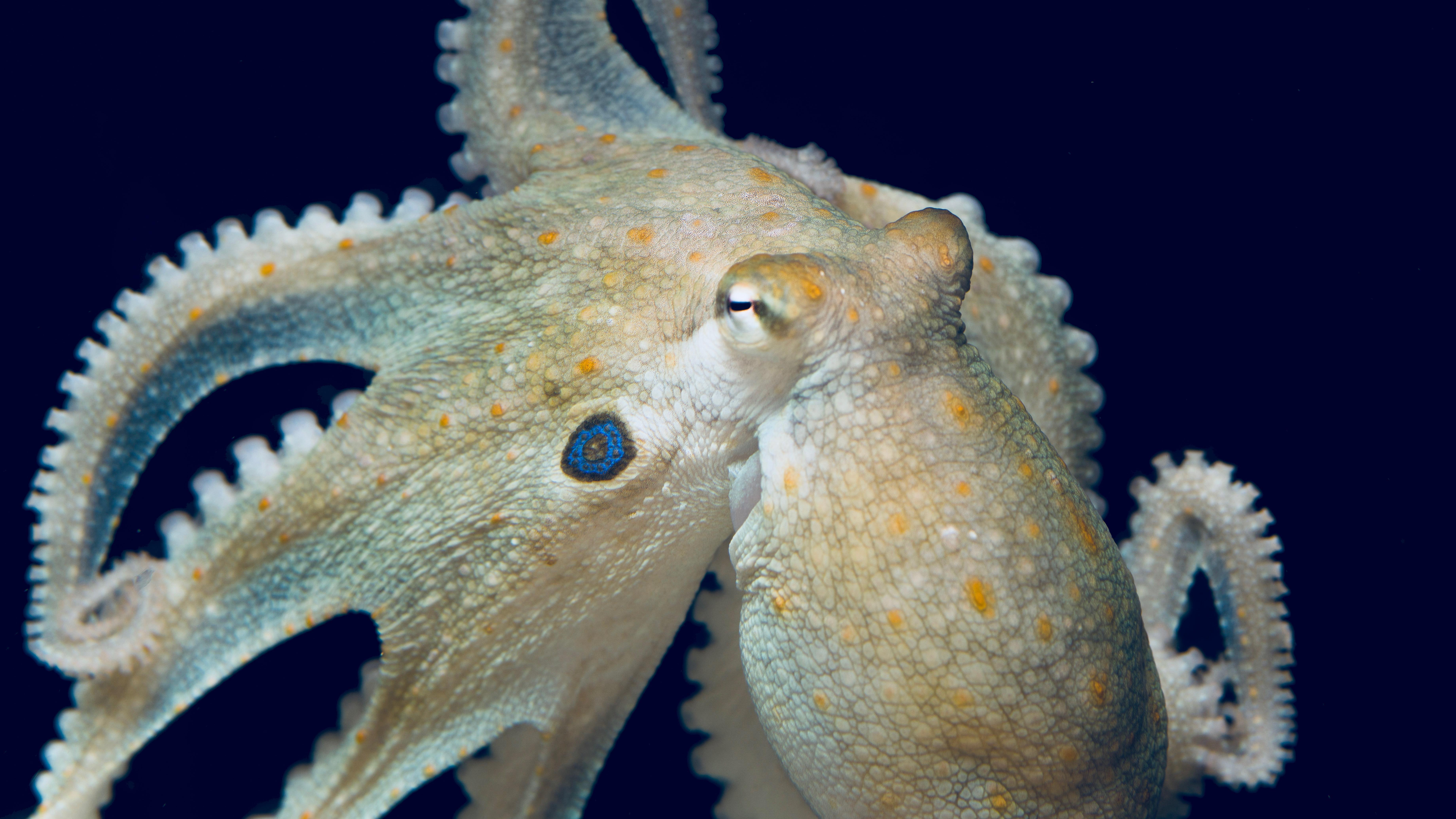 octopuses get friendlier on ecstasy just like humans quartz