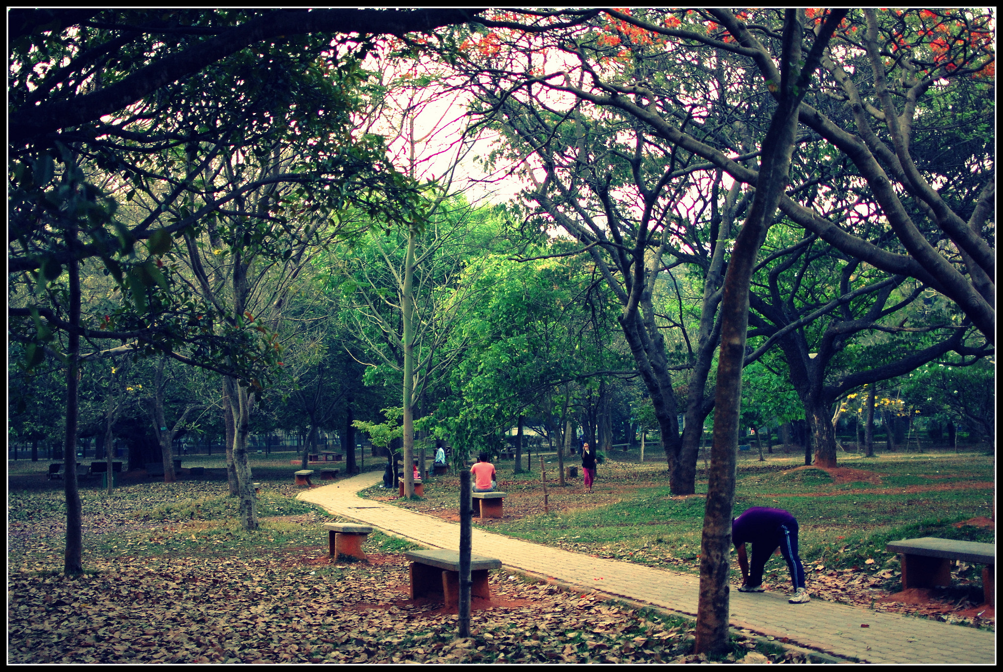 Cubbon Park is a rare green space in the heart of the city. (Photo credit: Chirag Rathod/Flickr [Licensed under CC-BY 2.0])