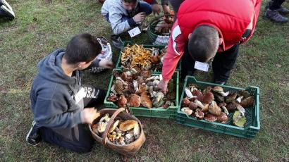Young boys collect mushrooms at a foraging festival, some 60 kilometers south of Vilnius, Lithuania, in 2017.