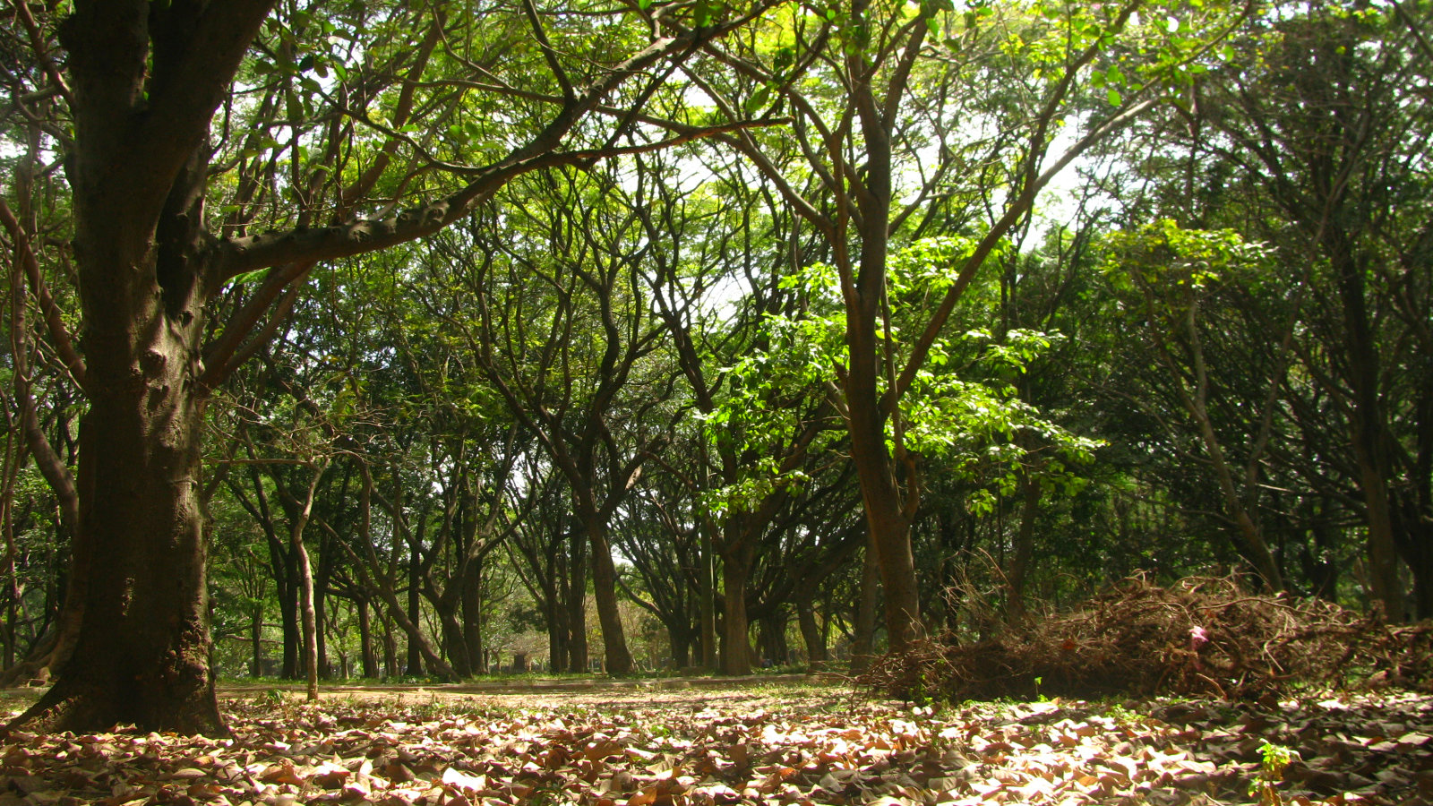 India-Bangalore-parks-green-space