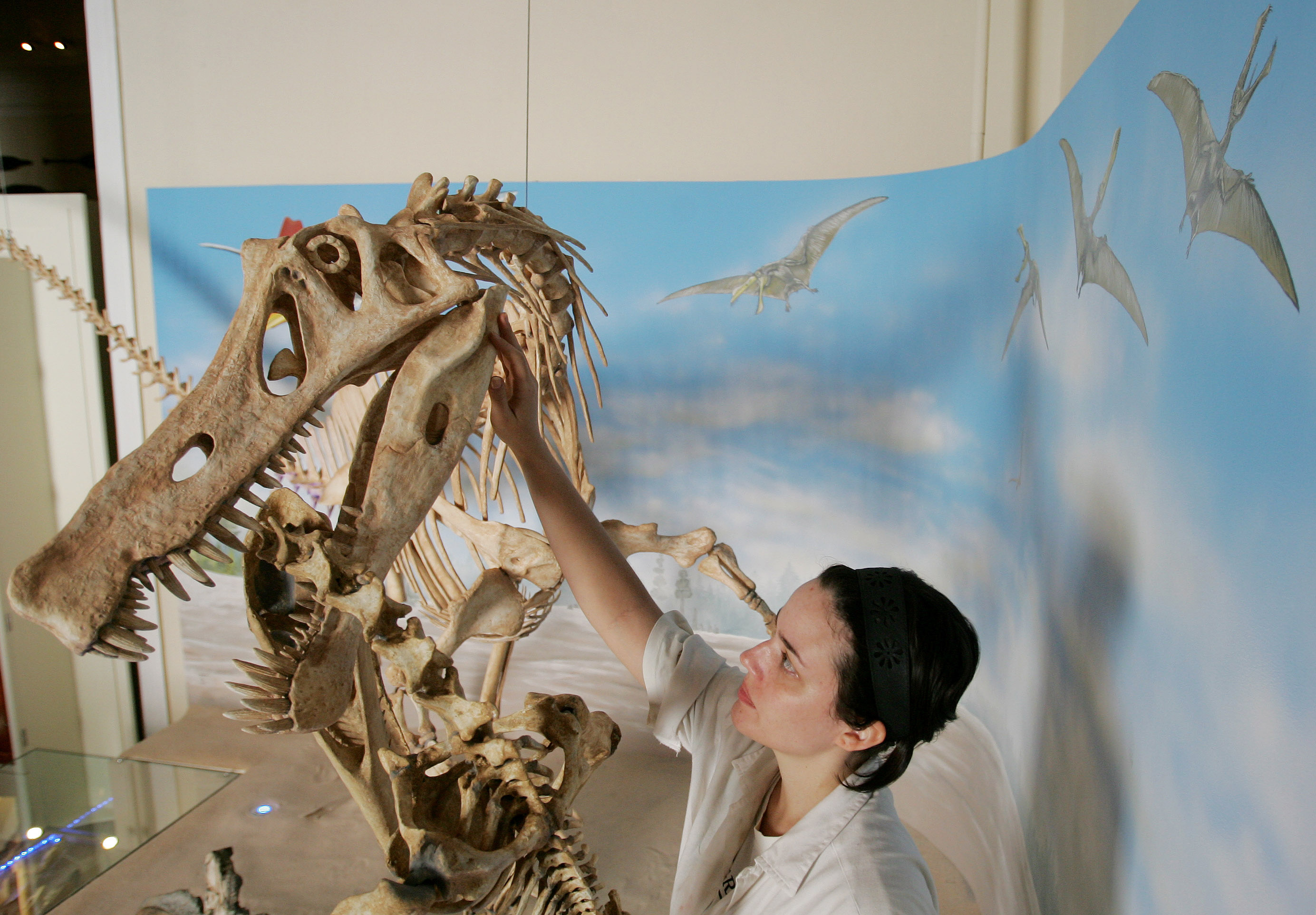 A woman works on a replica of the Angaturama Limai's skeleton, the largest carnivorous dinosaur found in Brazil, at the National Museum in Rio de Janeiro, Thursday, May 14, 2009..