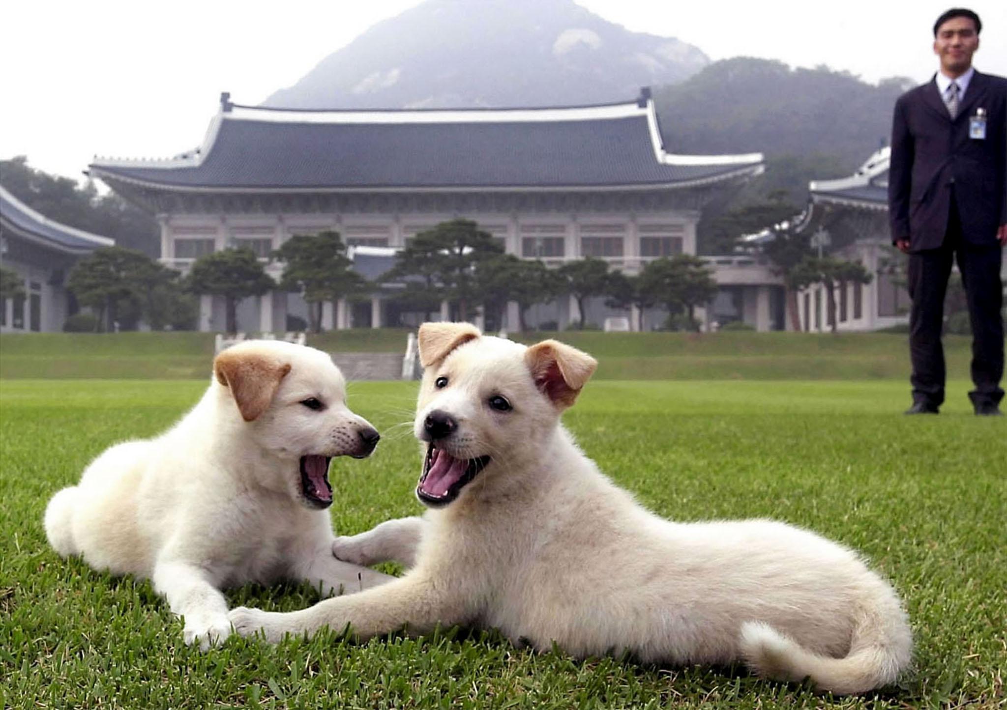 North Korea Has Sent South Korea Two Dogs As A Gesture Of Peace Quartz