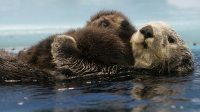 advice from a sea otter on how to live your best life quartzy