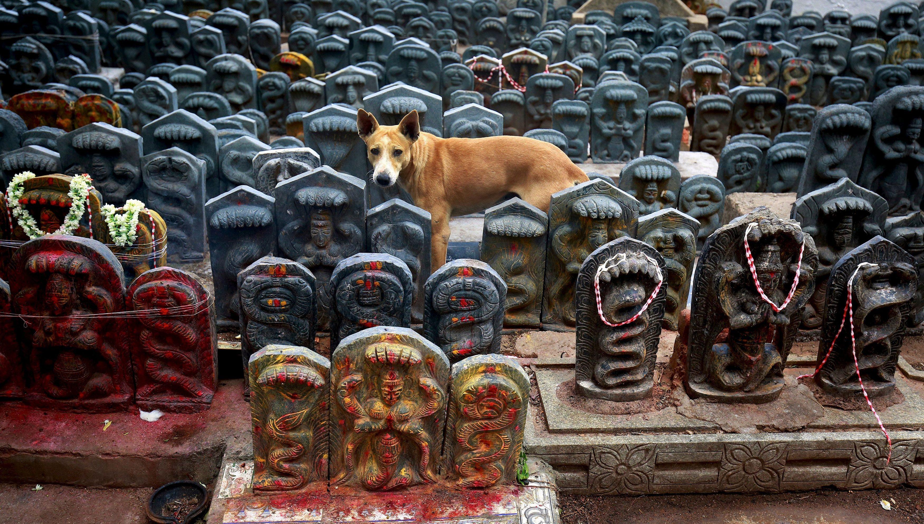 fake-aadhaar-dog-hanuman