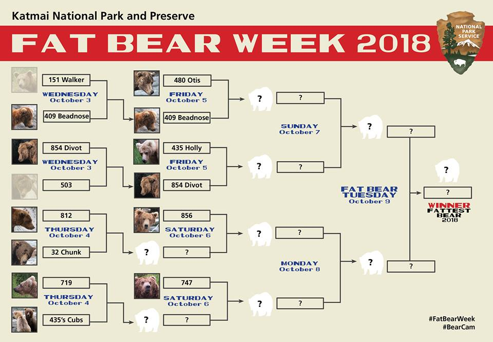 Fat Bear Week is the life-or-death showdown to find Alaska's