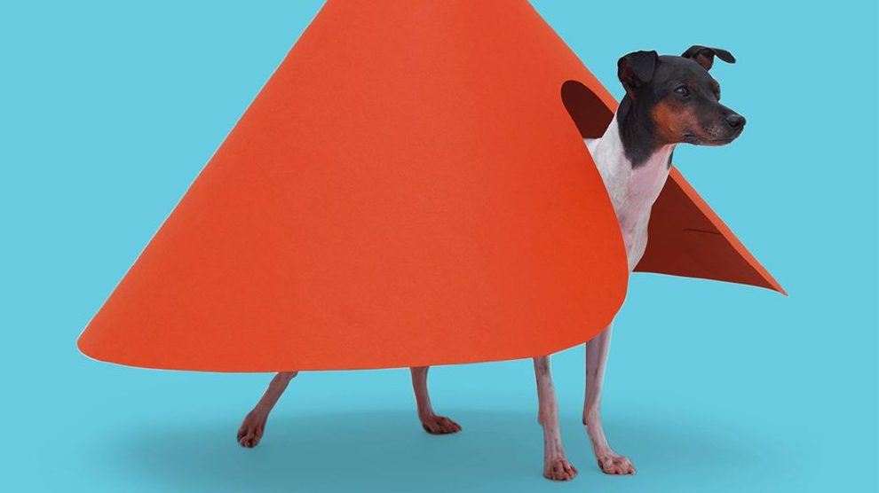 We're living in a golden age of pet architecture