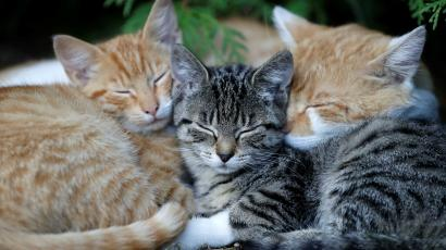 sleeping cute cats