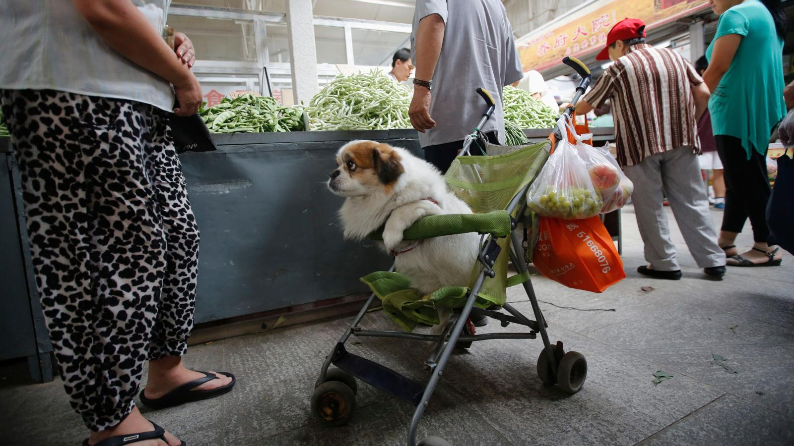 A Chinese City Keeps Tabs On Bad Pet Owners With A Credit Score Quartz