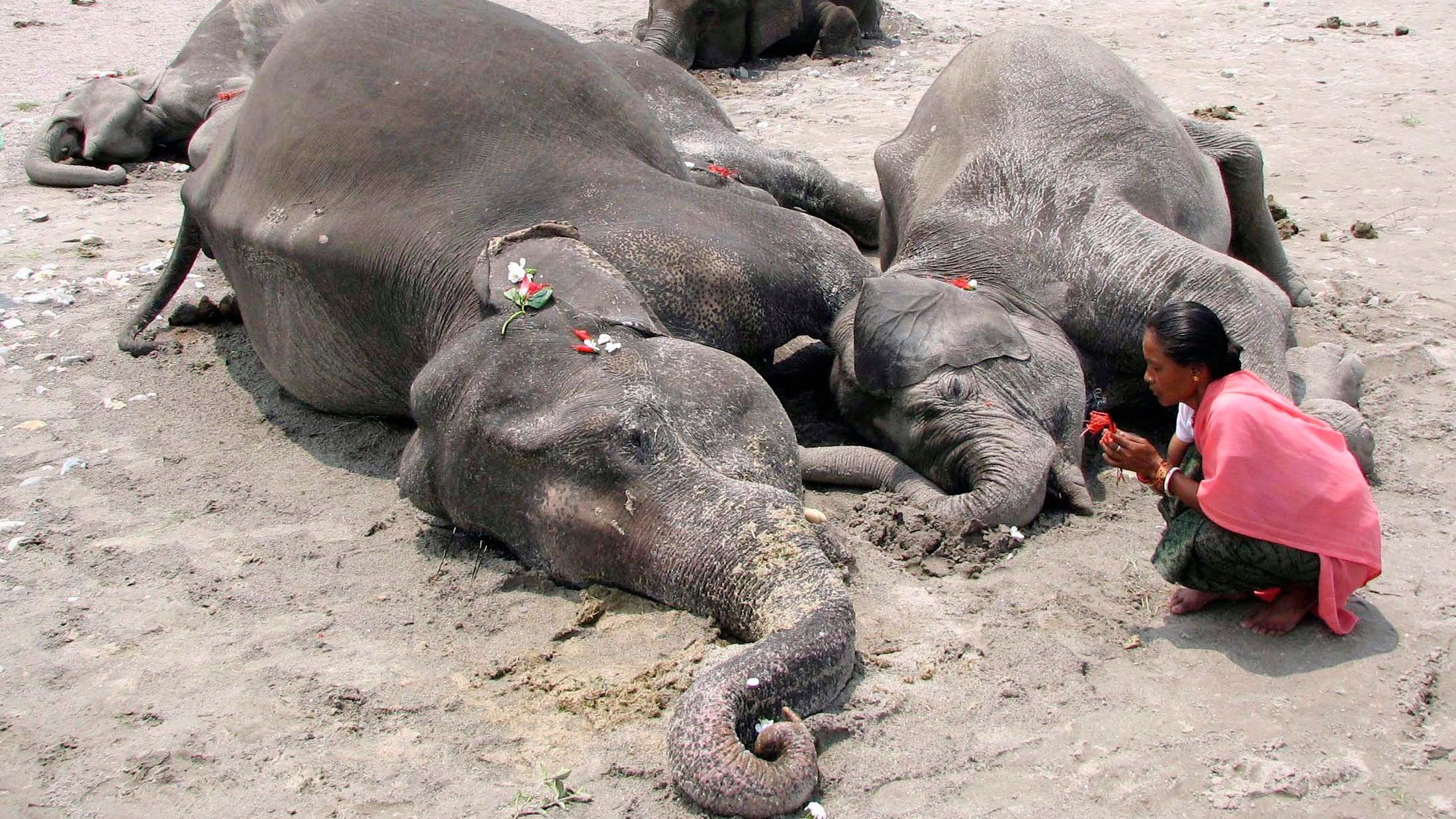 Heartbreaking photos that show how India is slowly killing its elephants