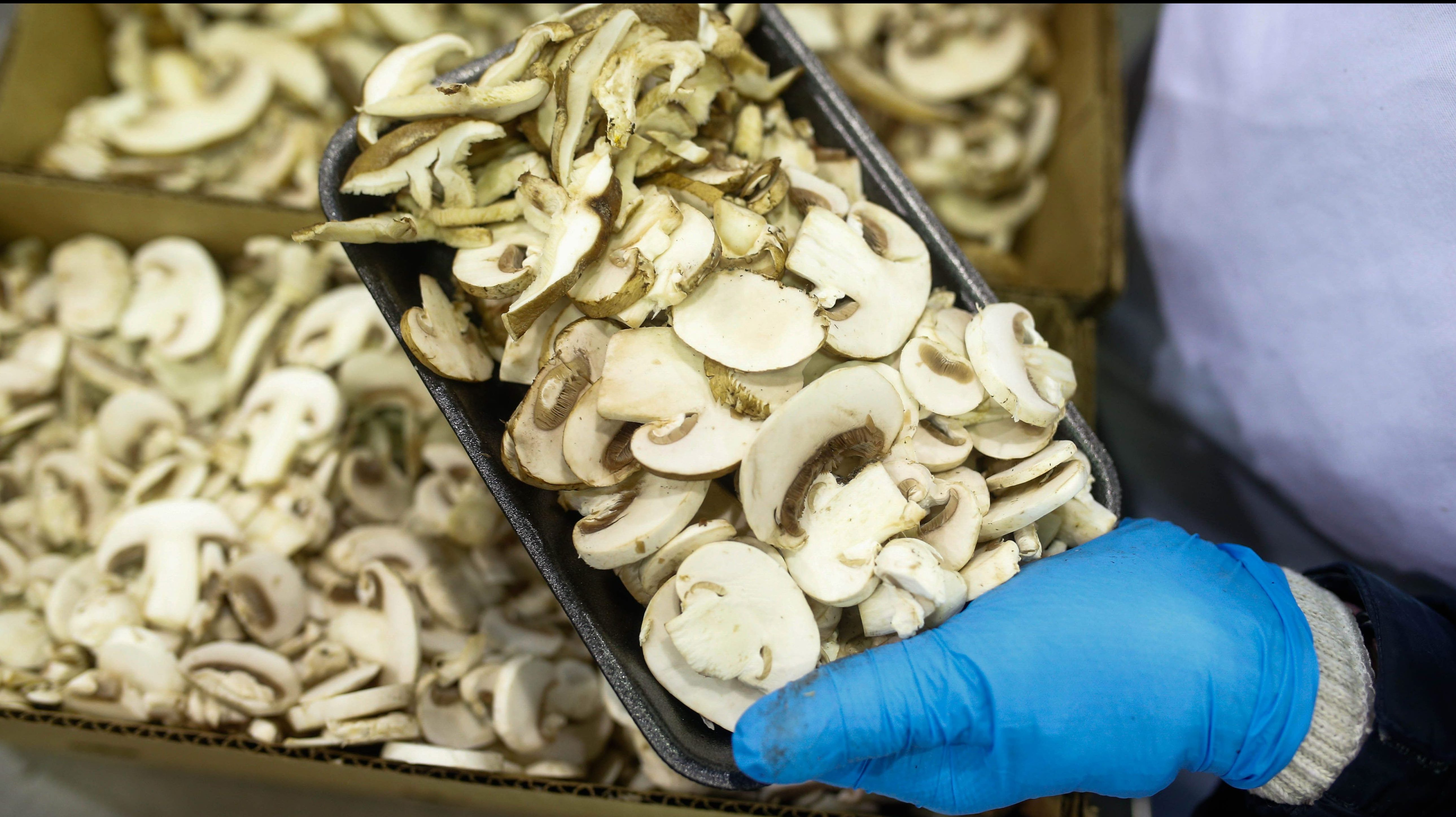 A worker packages commercial mushrooms.