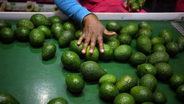 Mexico's avocado growers increasingly face cartel violence.