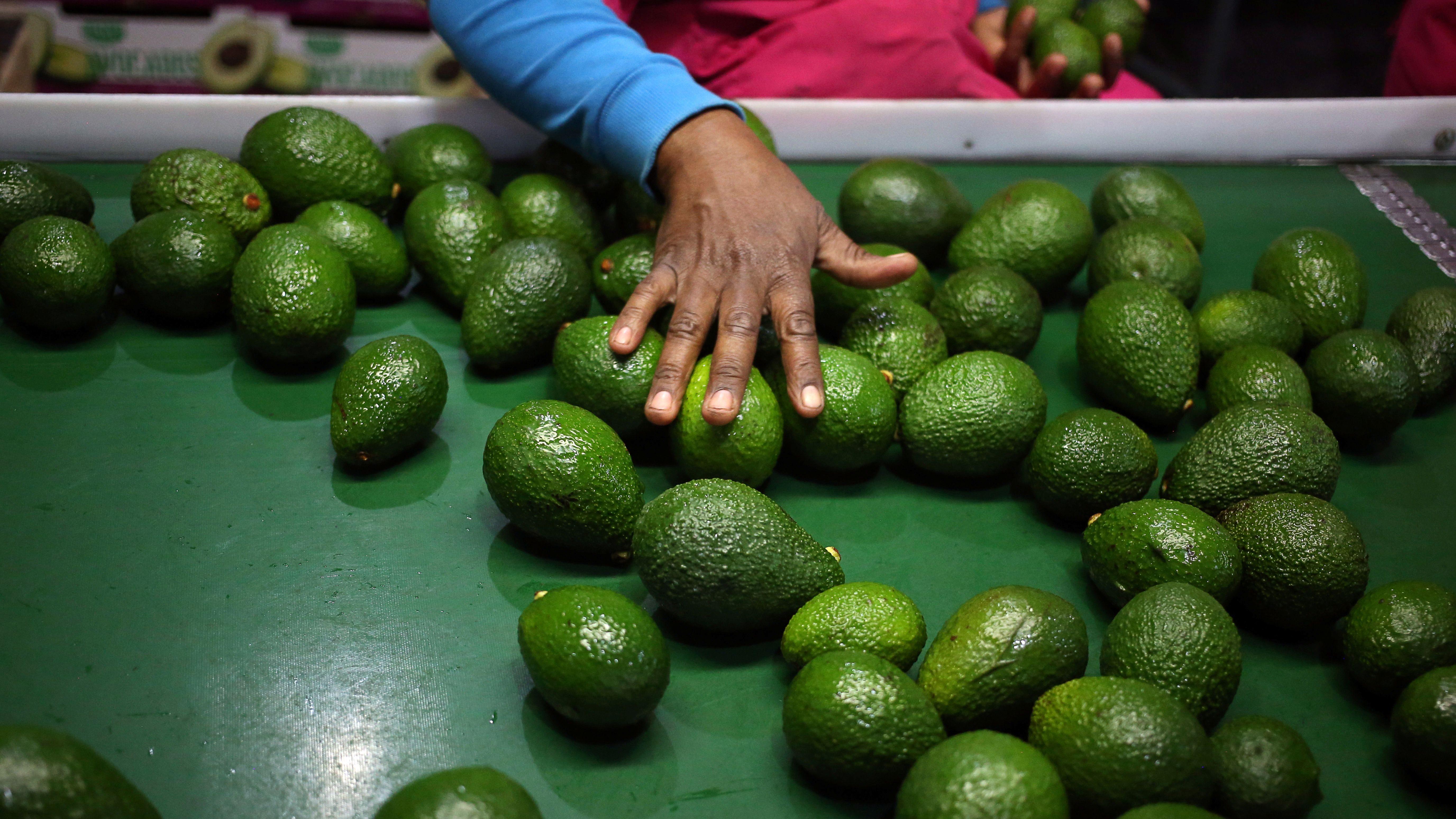 Mexico's avocado growers increasingly face cartel violence.