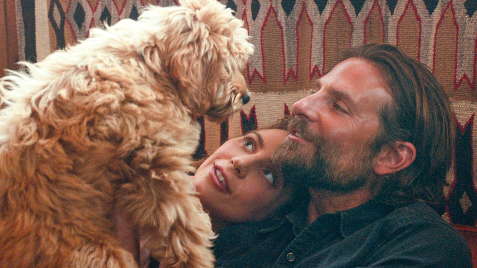 Bradley Cooper S Dog Charlie Merits Oscar For A Star Is Born