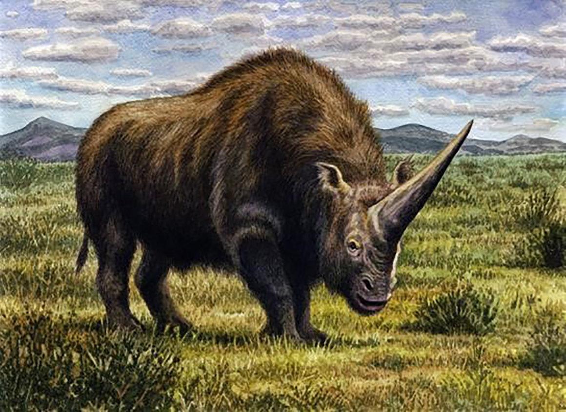Climate Change Killed The Siberian Unicorn Quartz