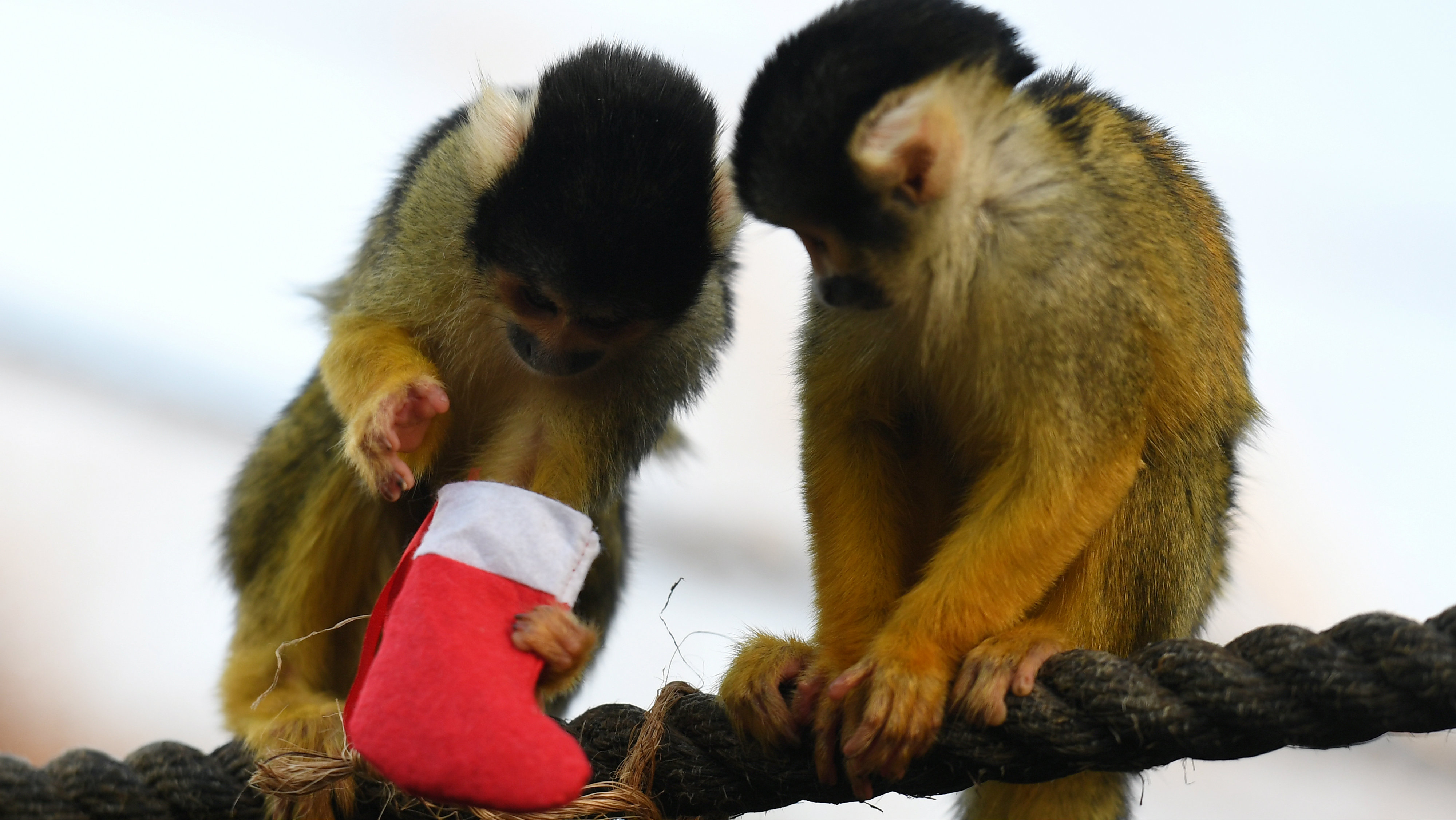 """To avoid """"gifting creep,"""" embrace the stocking-only Christmas"""