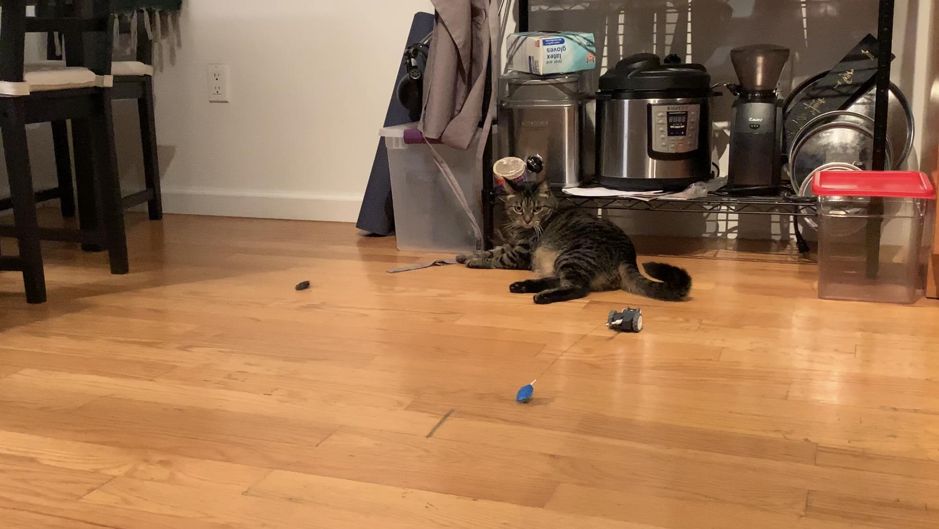 Does your cat need a $150 robot? — Quartz