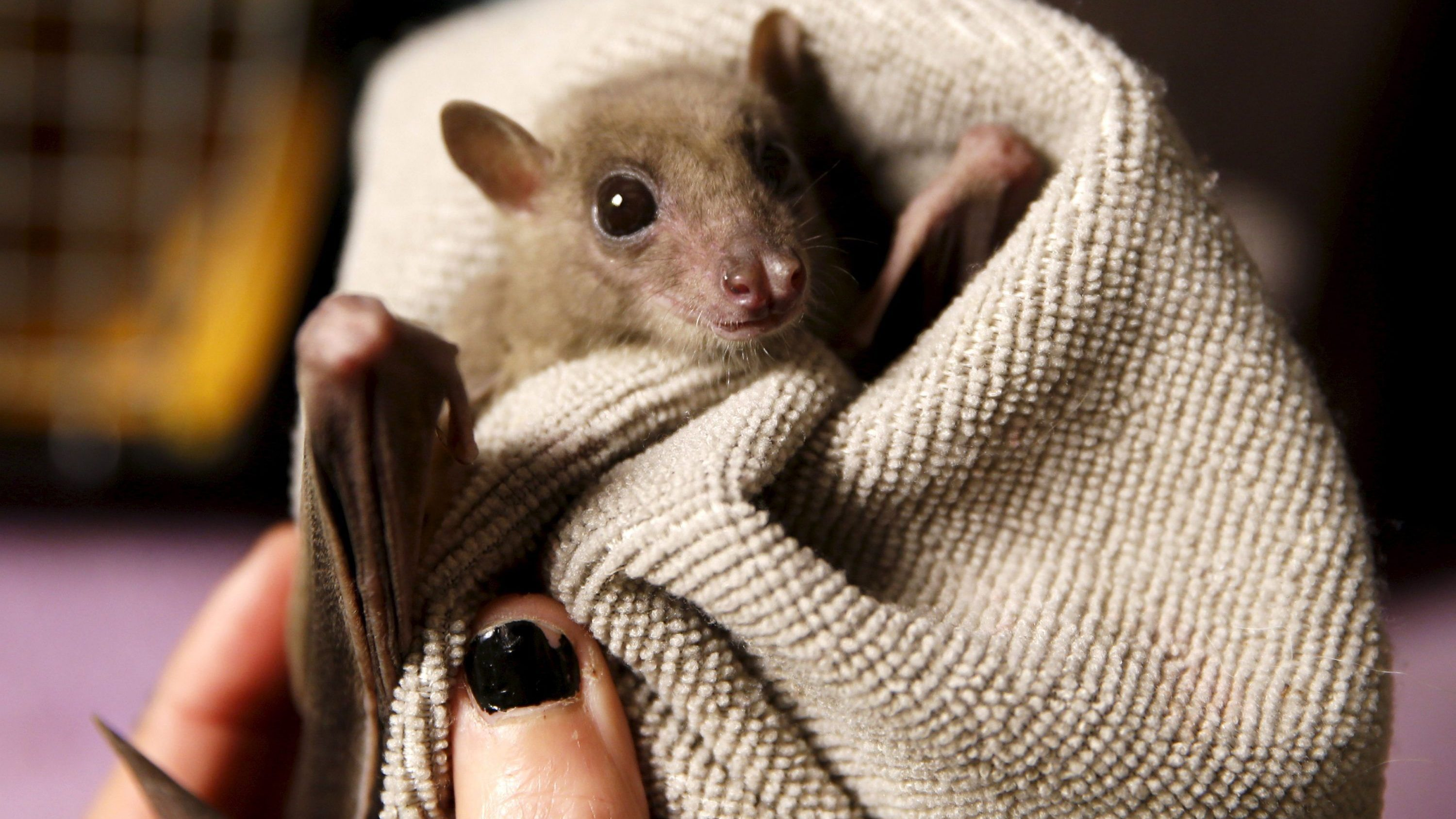 Bats can swim in water and you can do anything you put your mind to
