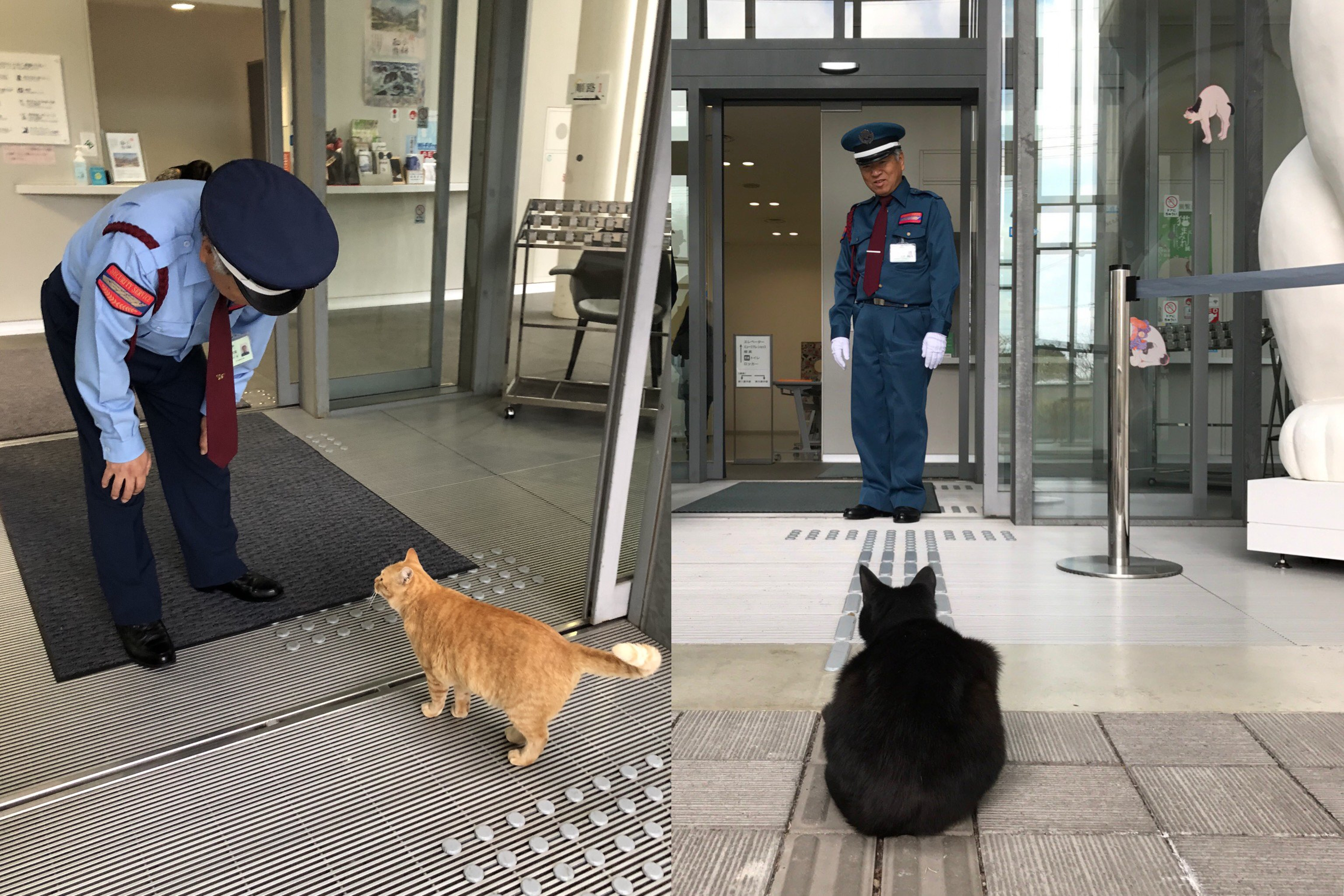 Two cats have spent two years trying to get into a Japanese art museum