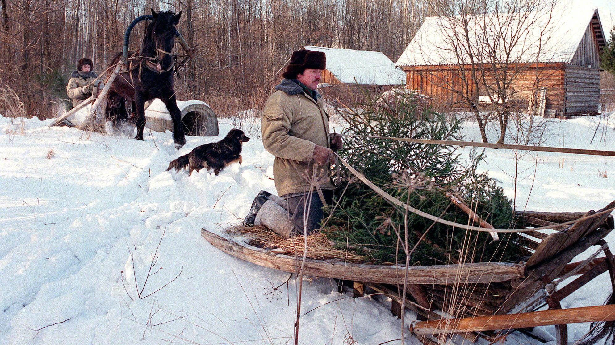 Cutting down christmas tree