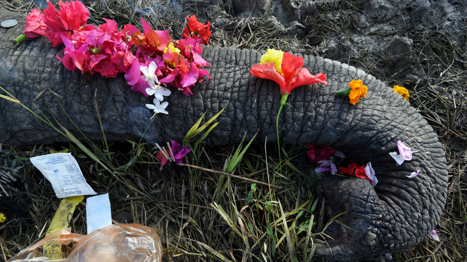 Elephants are getting choked, electrocuted, and even bombed to death in India