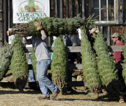 Christmas Tree Shortage America Is Facing The Reality Of Fewer