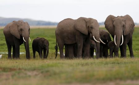 A family of elephants walk in Amboseli National Park, southeast of Kenya's capital Nairobi
