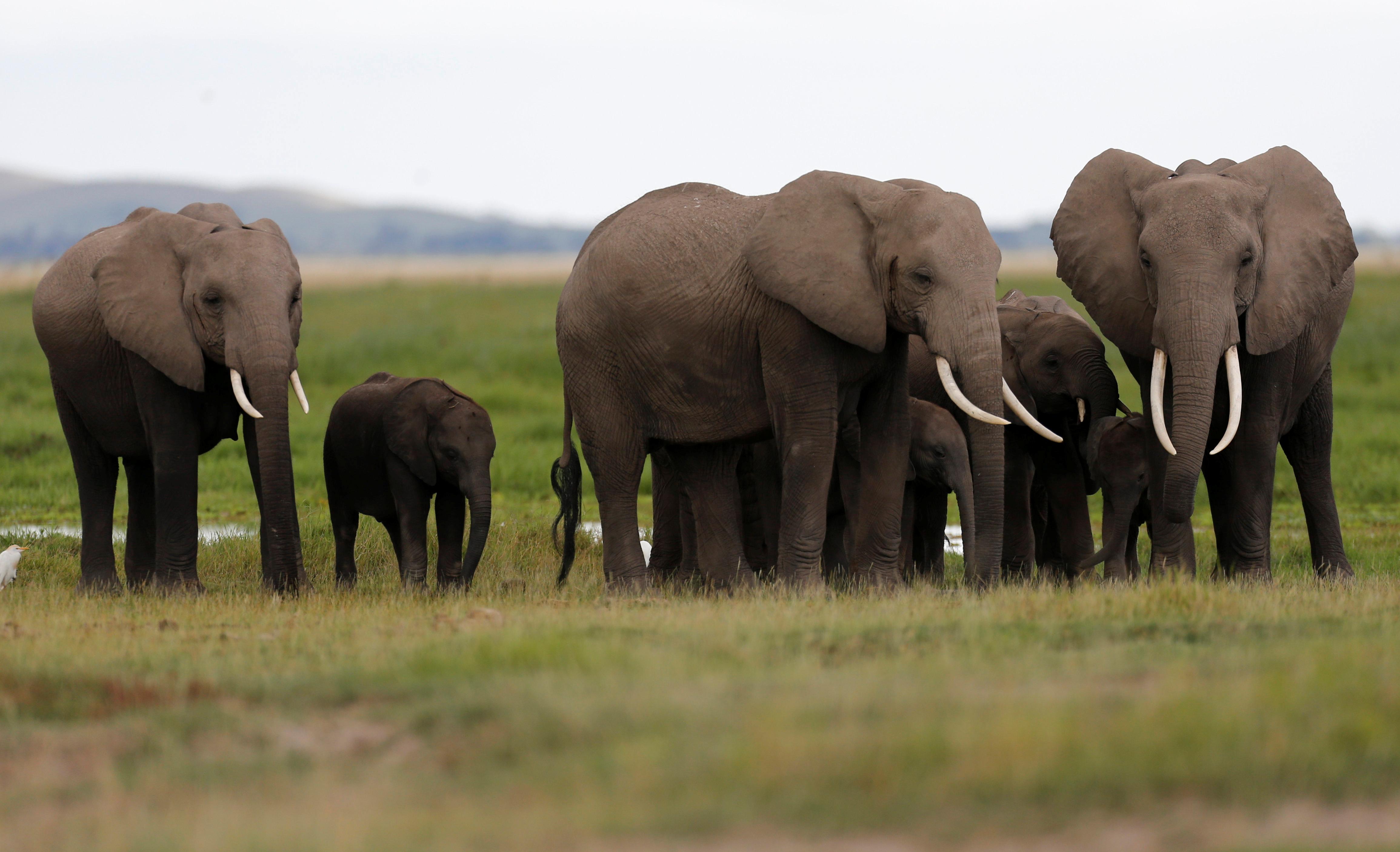 A family of elephants walk in Amboseli National Park, southeast of Kenya's capital Nairobi