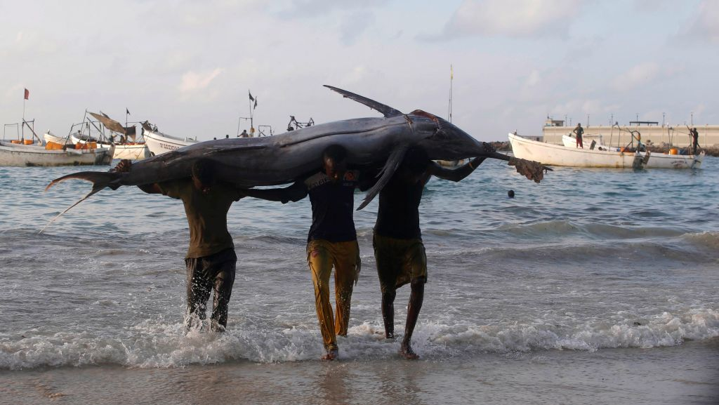 Somali fishermen carry a fish from their vessels on the shores of the Indian Ocean on Liido beach, in Mogadishu, Somalia November 4, 2016