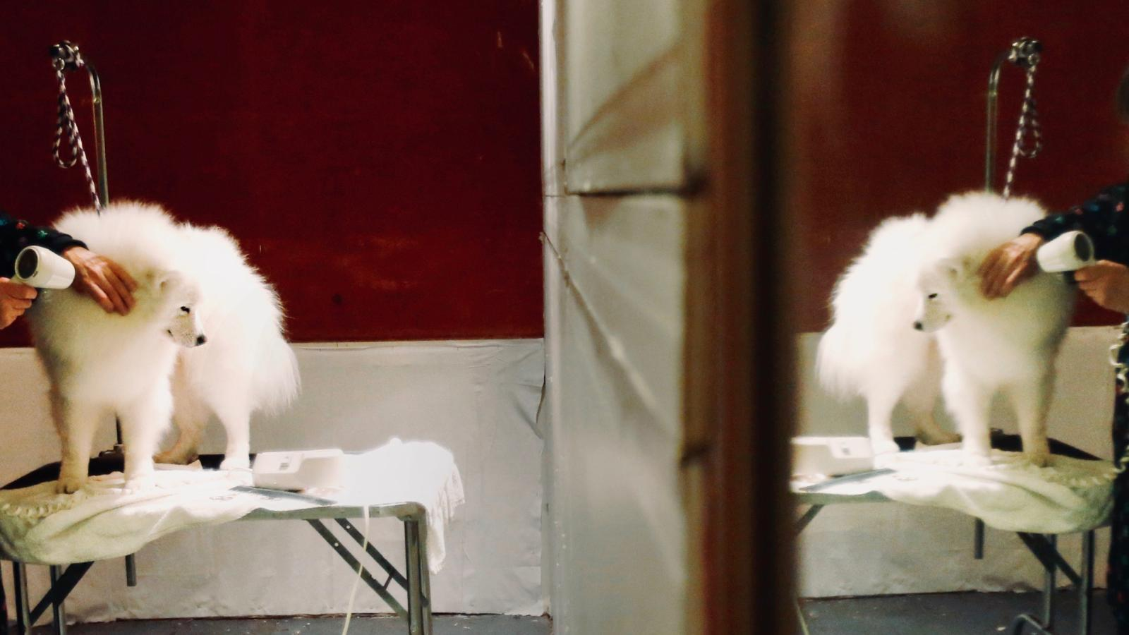 The mirror test for animals reflects the limits of human