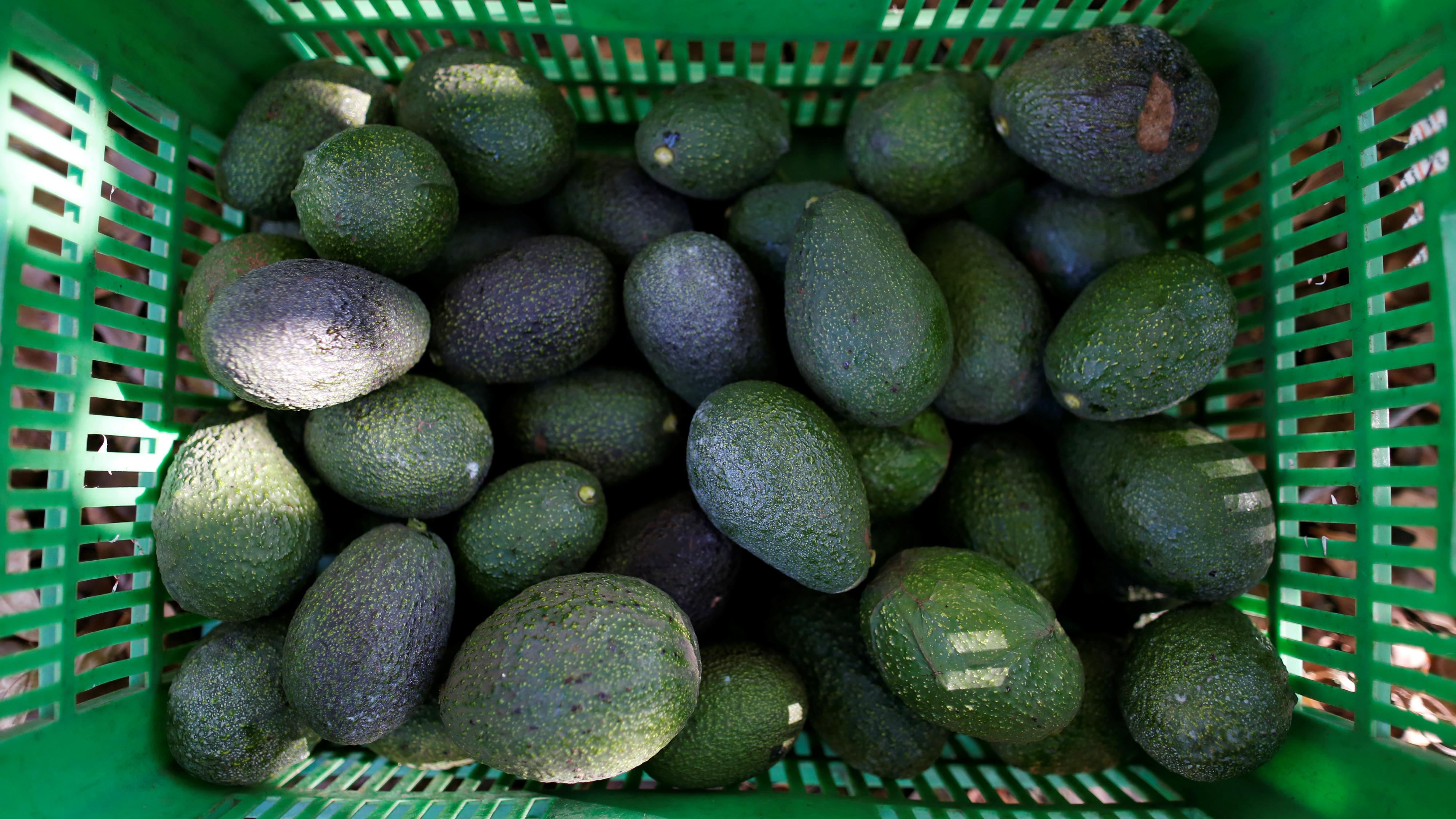 A basket of avocados.