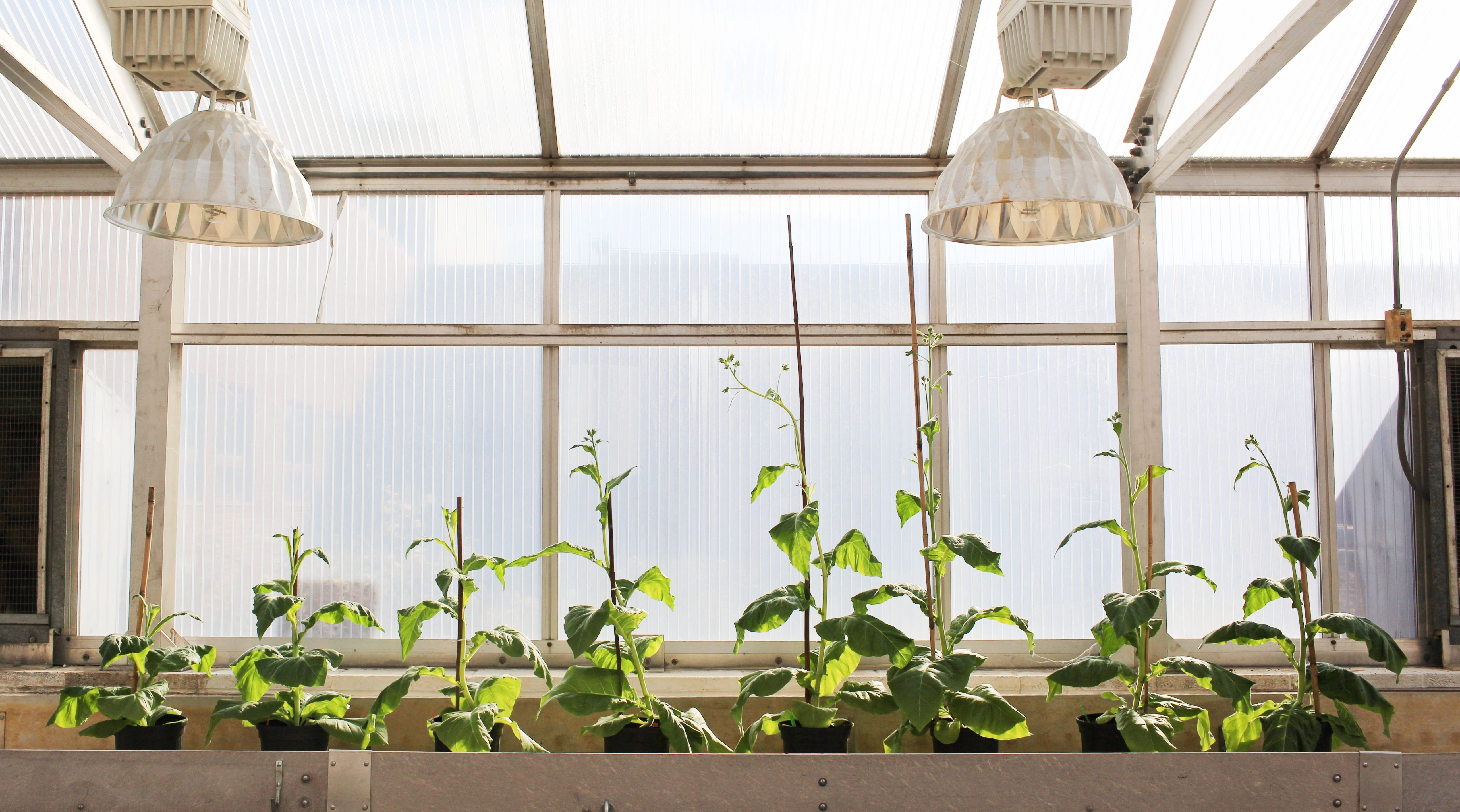 Scientists have found a way to help plants photosynthesize