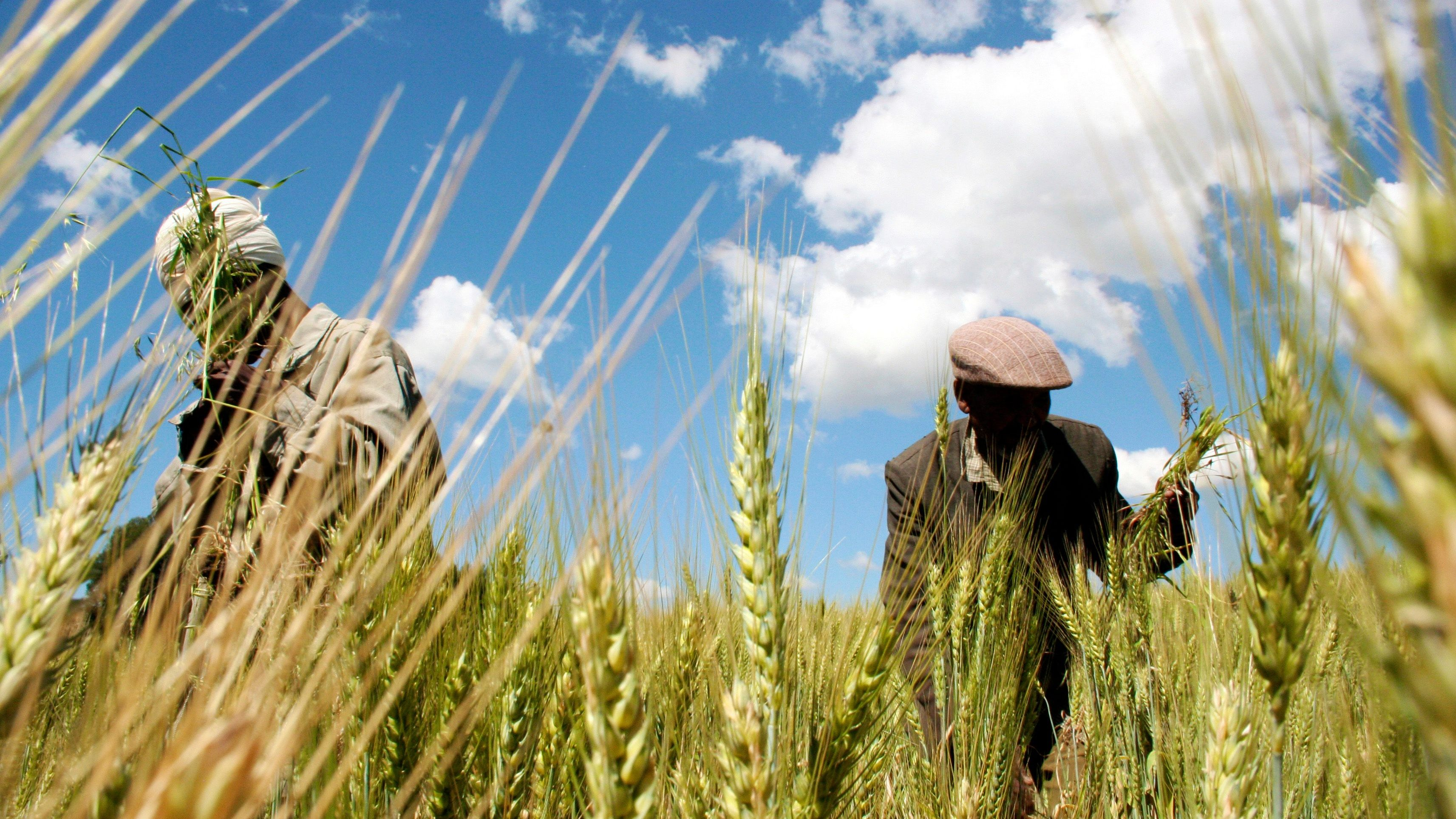 Ethiopia's irrigation investment has boosted economy