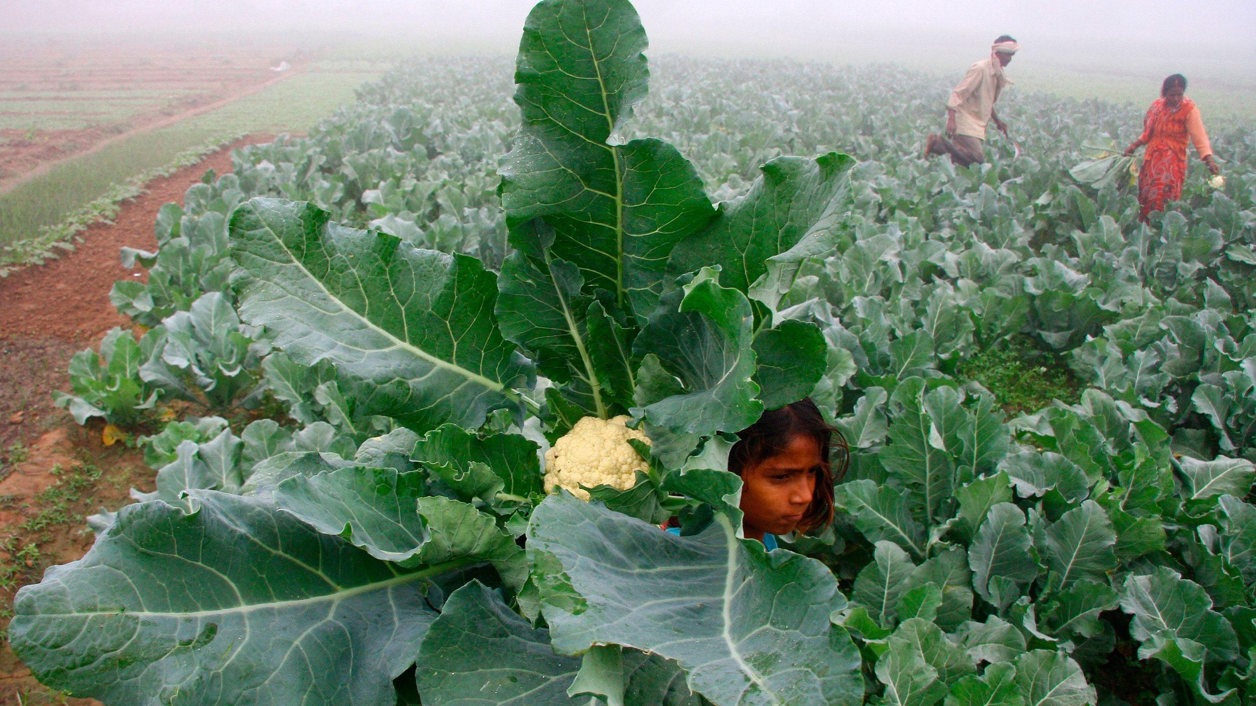 farmer-india-rural-budget-modi