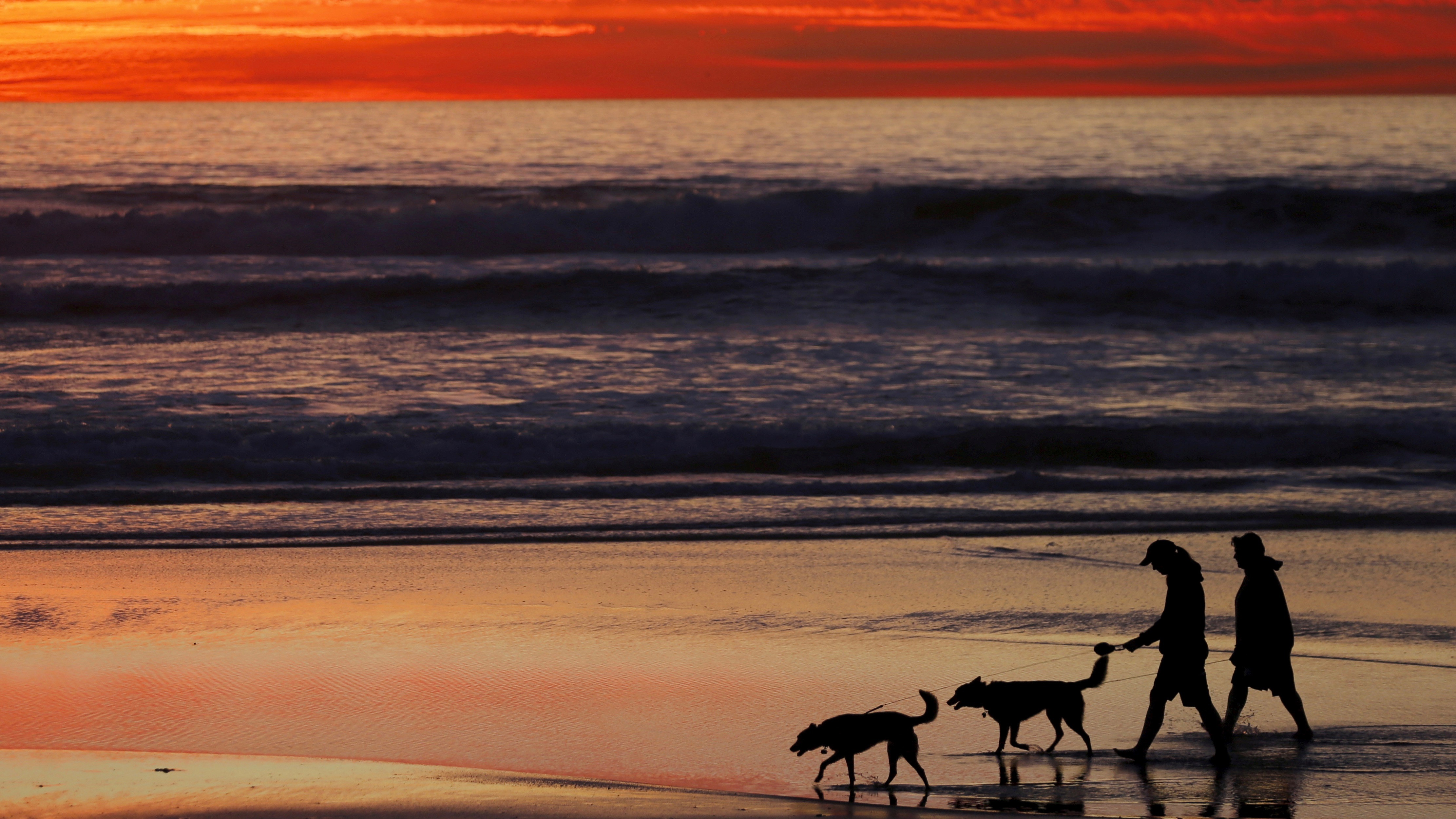 People and dogs on beach at sunset.