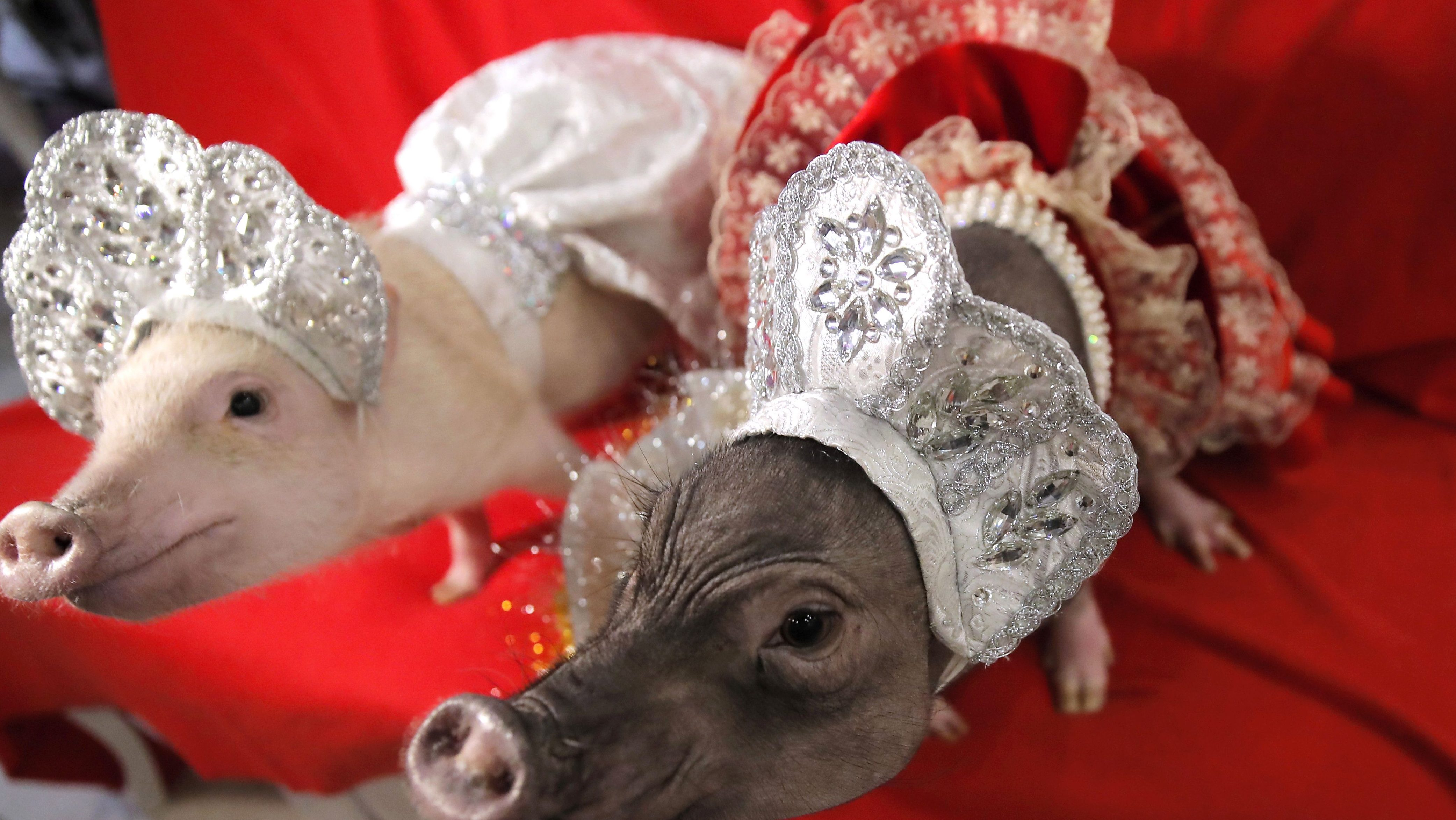 Year of the pig  Everything you should know about the coming Lunar New Year be768390f5