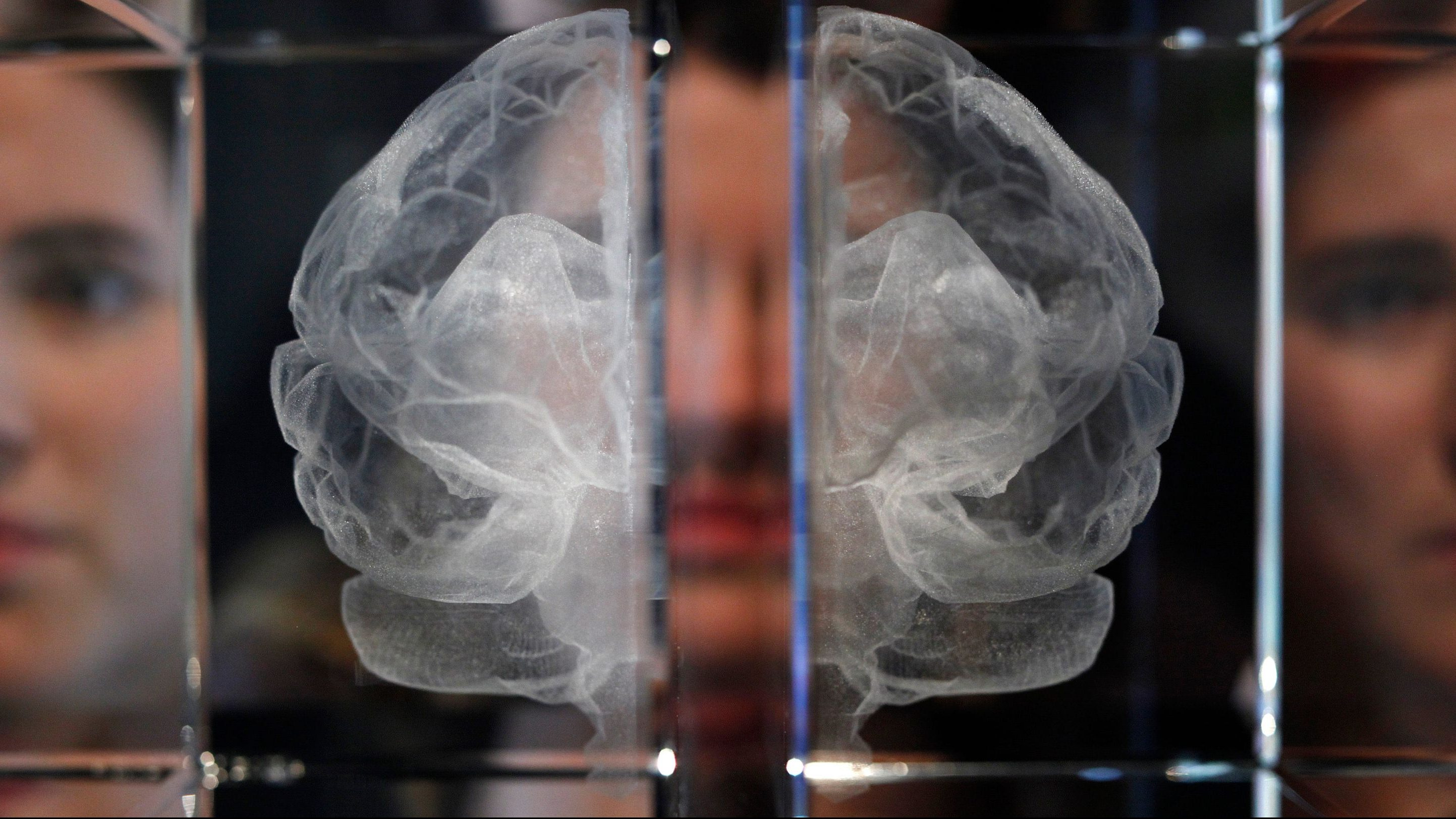 an image of a translucent brain scan