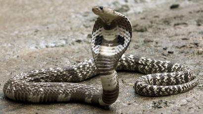 The World Health Organization is deeply worried about snake