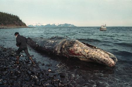 Dead whales washing ashore