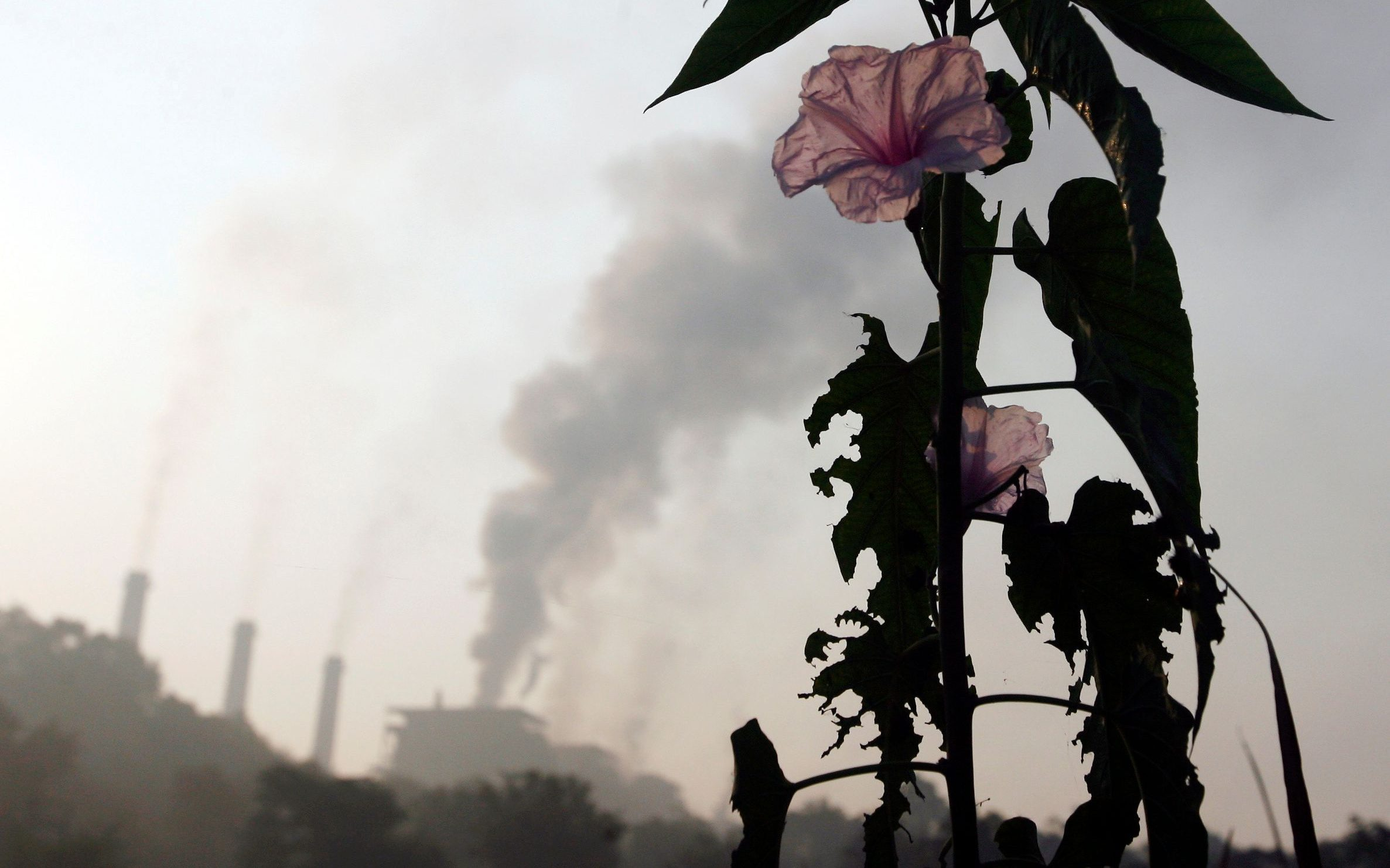 india-energy-co2-emissions-carbon-iea