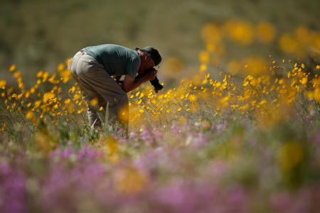 Photographing the super bloom