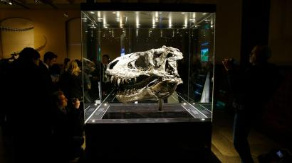 The original skull of a Tyrannosaurus rex skeleton is shown at the Natural History Museum in Berlin, Germany December 16, 2015. The approximately 70 million year-old fossil, which was found in Montana, U.S. in 2012, will be displayed to the public for the first time in a special exhibition. Nick-named 'Tristan', the skull is one of the world's best-preserved Tyrannosaurus rex specimens. REUTERS/Pawel Kopczynski - LR2EBCG0ZT7KD