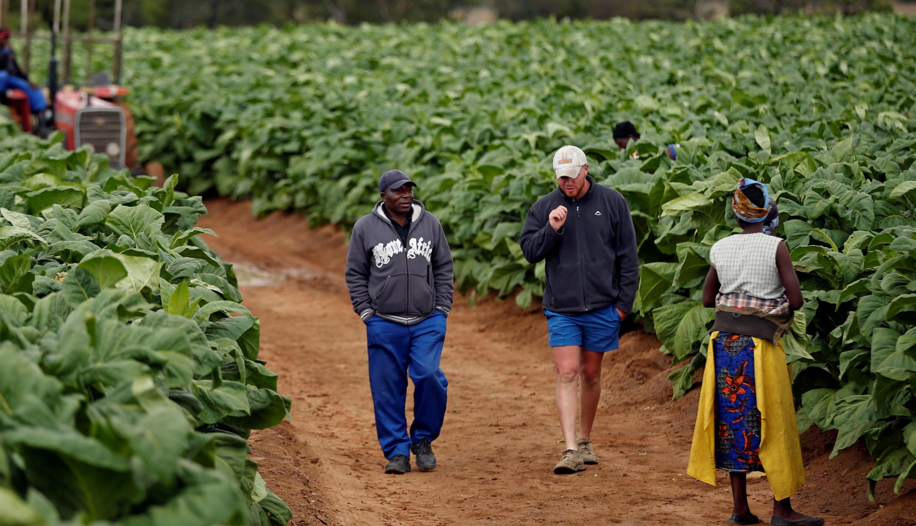 Zimbabwe's plan to compensate white farmers is facing a backlash from party loyalists and the farmers