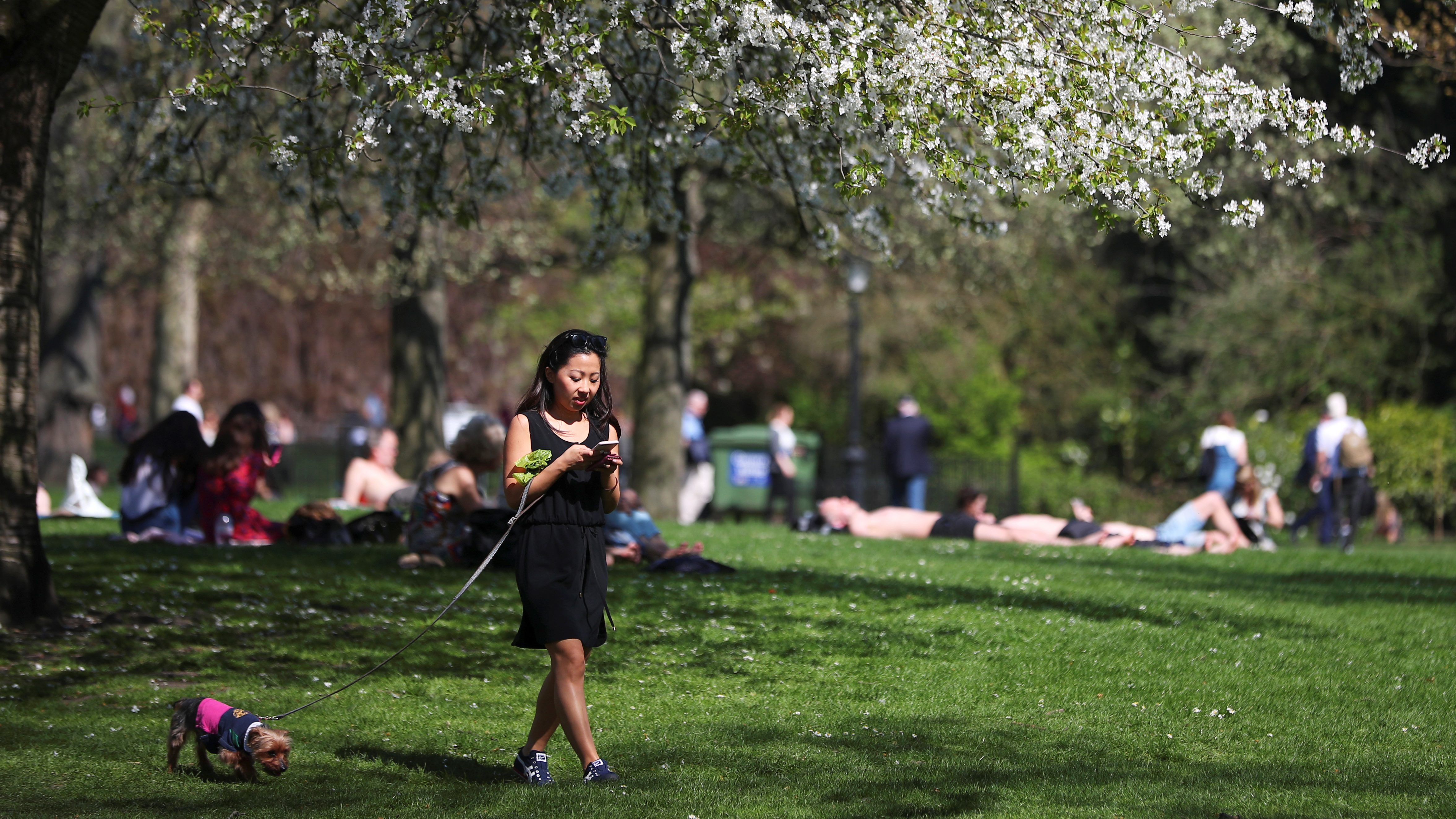 A woman walks her dog in the sunshine in St James Park, London